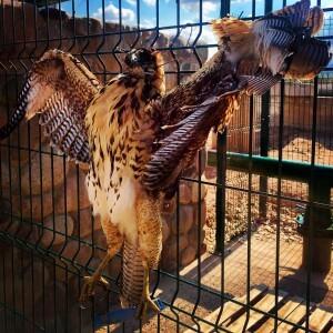 Argentinien Weinreise Bodega Ojo de Vino - ein gekreuzigter Raubvogel