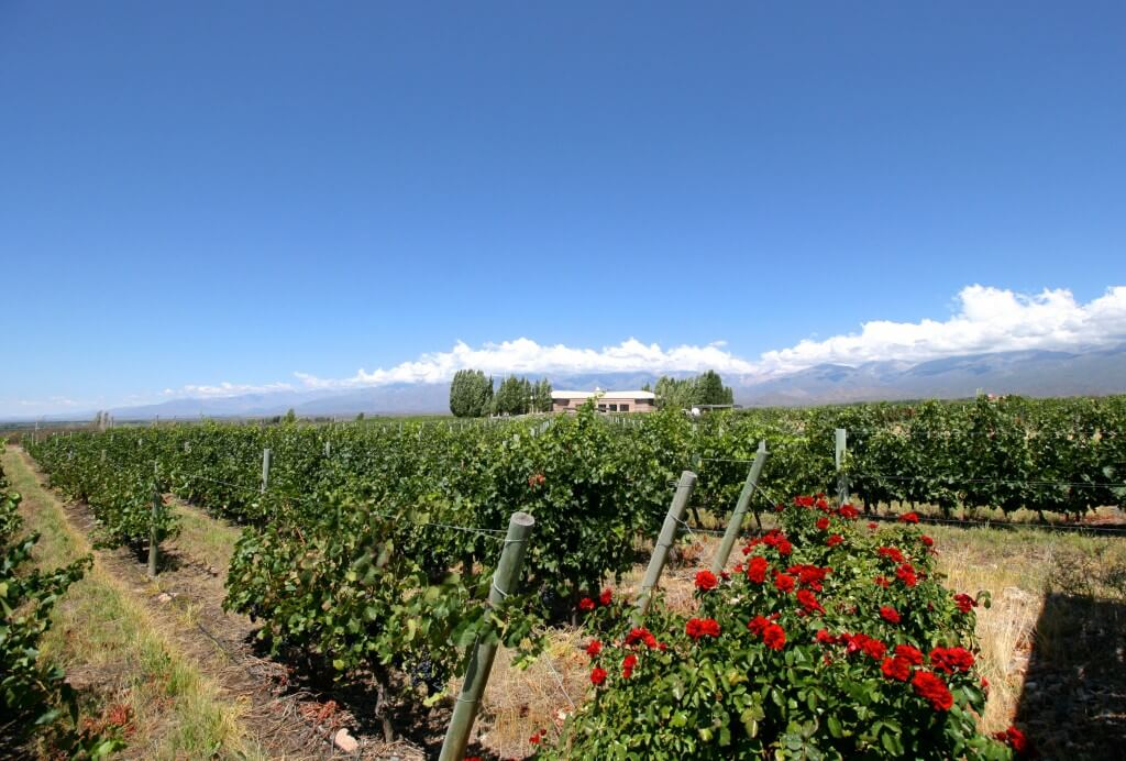 Argentinien Weinreise Mendoza - Bodega