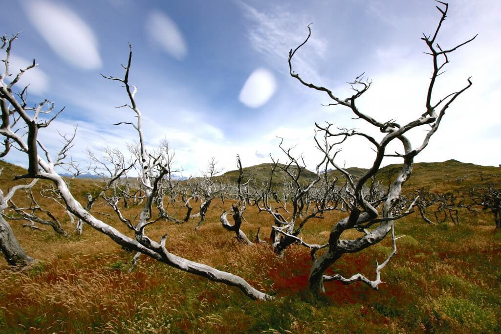 Reisetipps Patagonien: Torres del Paine Nationalpark