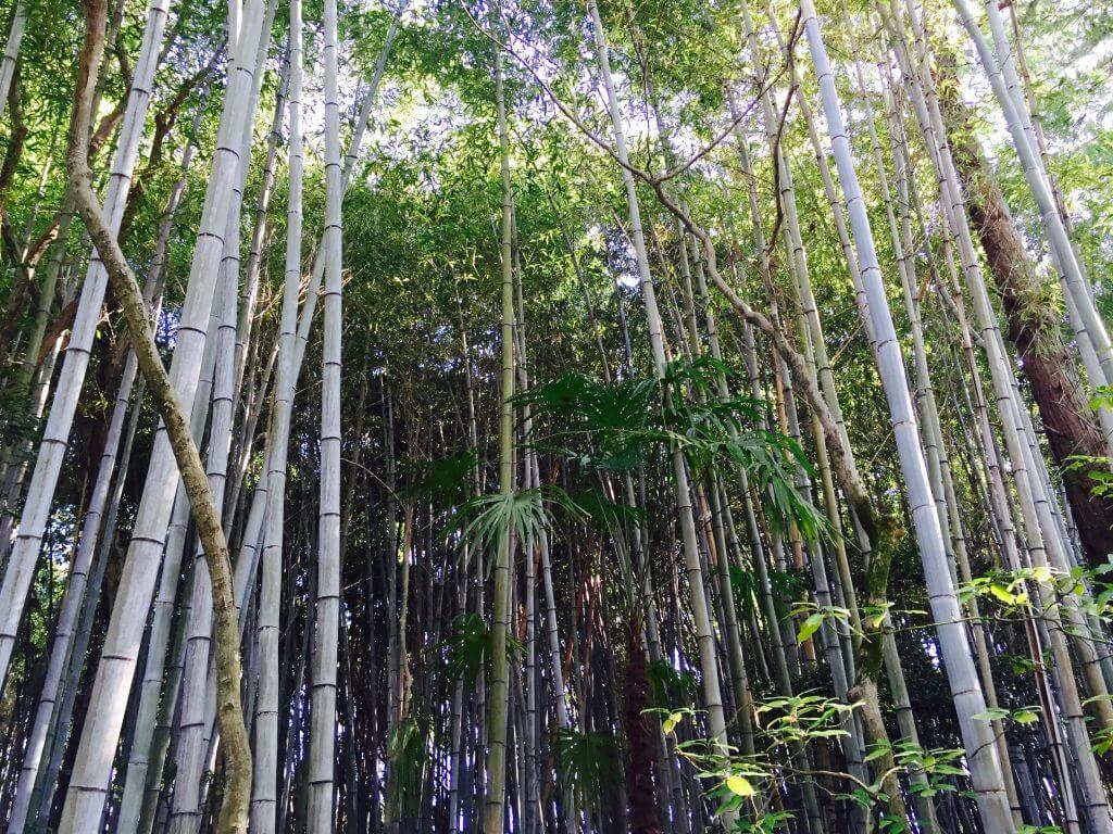 Reisetipps Kyoto: Bambuswald im Daitoku-ji