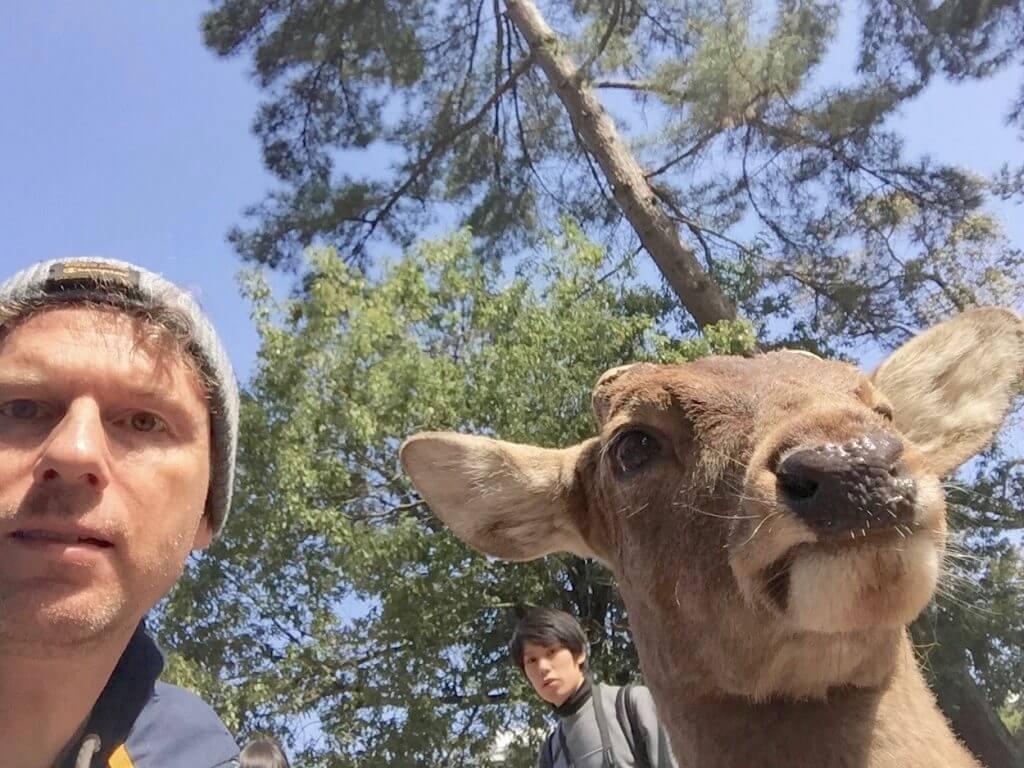 Reisetipps Kyoto: Nara-Park