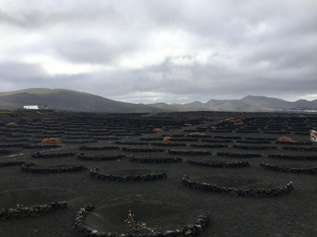 Reisetipps Lanzarote: Weinanbau auf Lanzarote