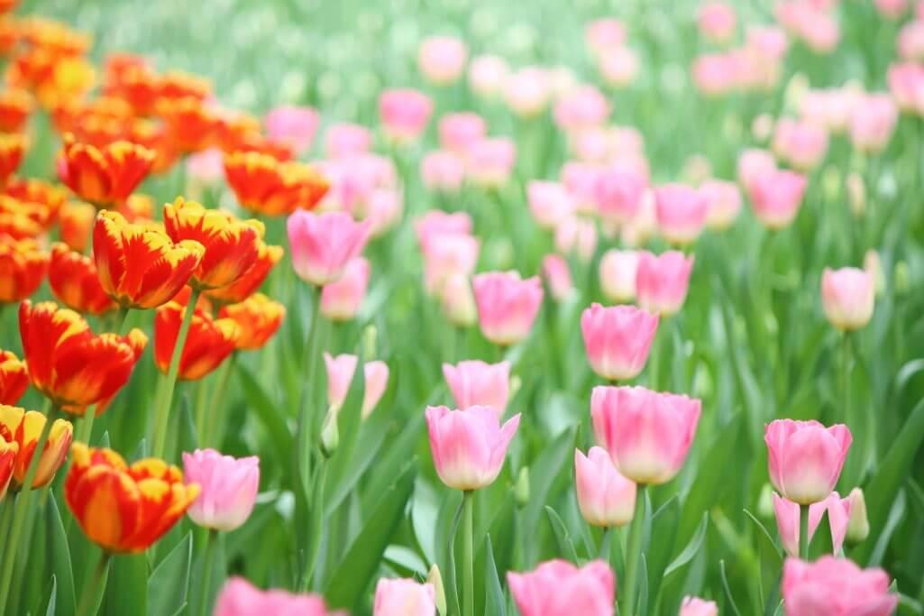 Peking Sightseeing Tipps: Blumenfeld im Zhongshan Park