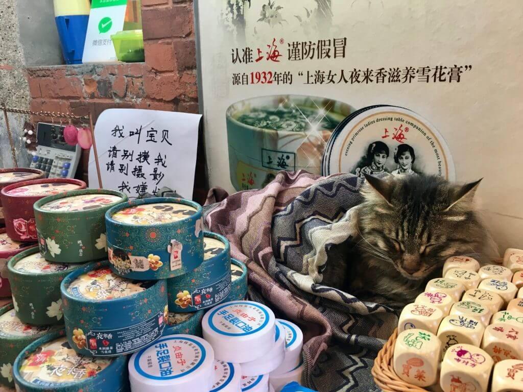 Sightseeing Tipps Shanghai: Katze im Tianzifang-Viertel
