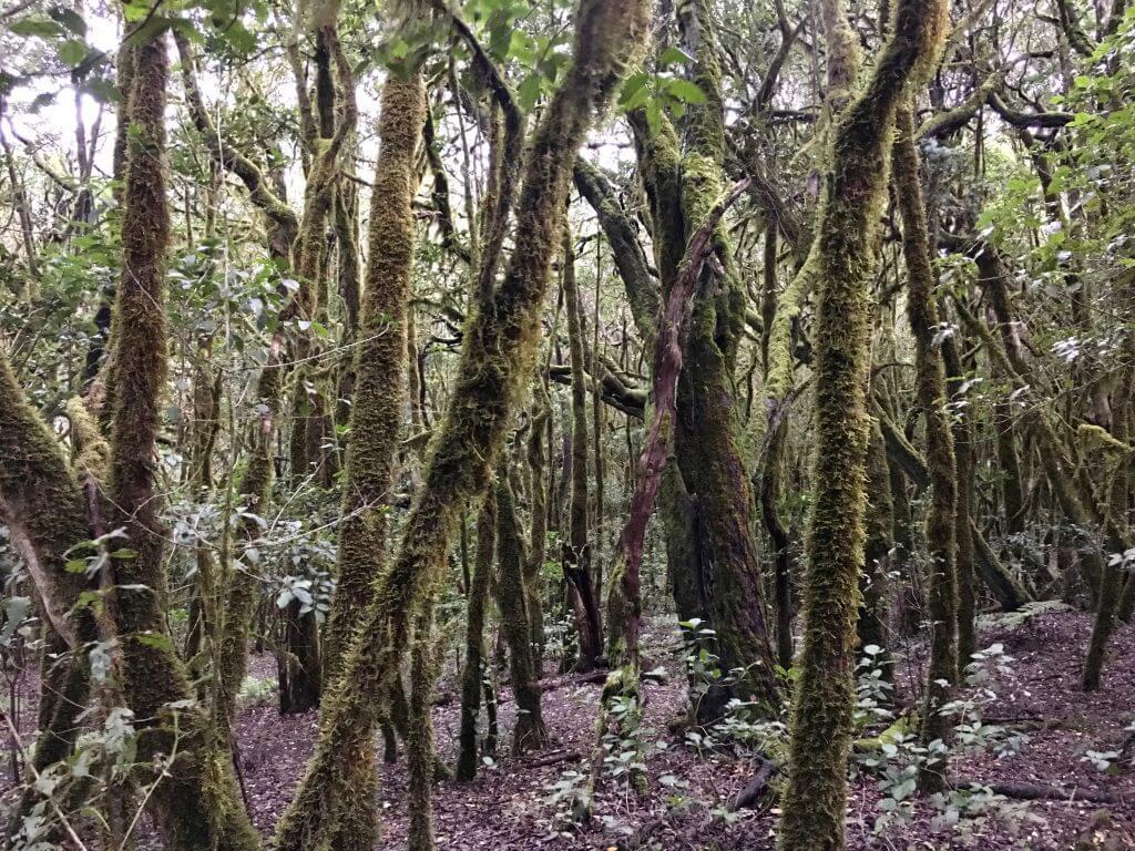 Eine Woche La Gomera: Nationalpark Garajonay