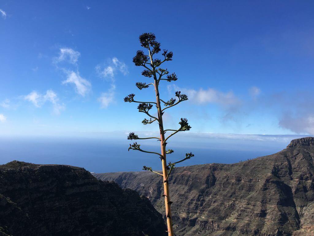 Eine Woche La Gomera: Auf dem Weg von Chipude auf den Garajonay