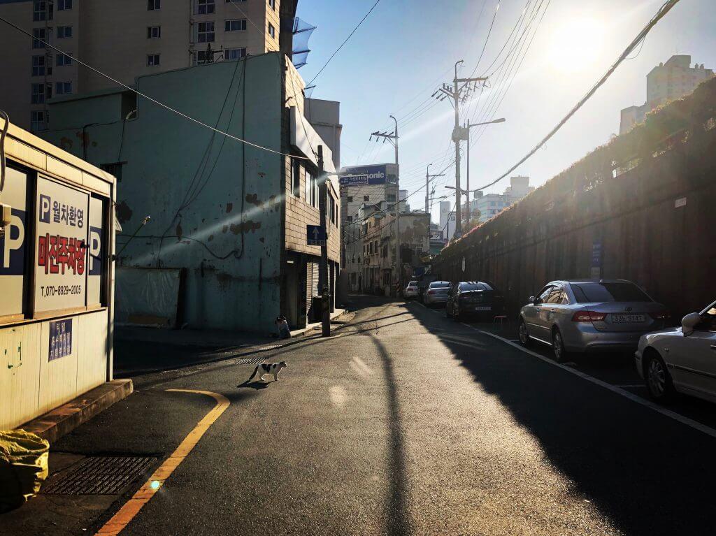 Busan (Korea) - Straße mit Katze im Maechukji Village
