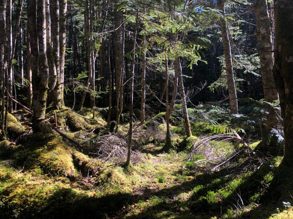 Märchenwald bei Nagano
